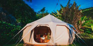 Lotus belle tent near trees