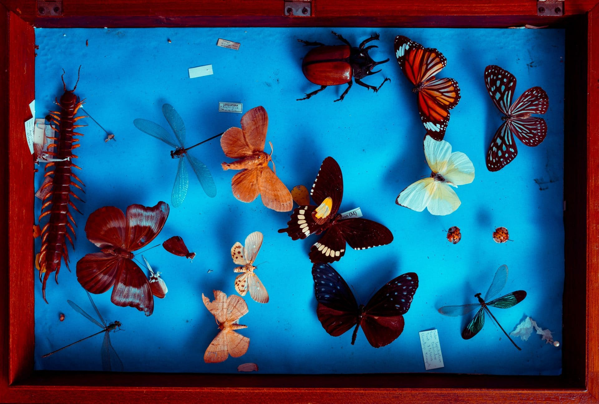 Photo of insects on a display frame