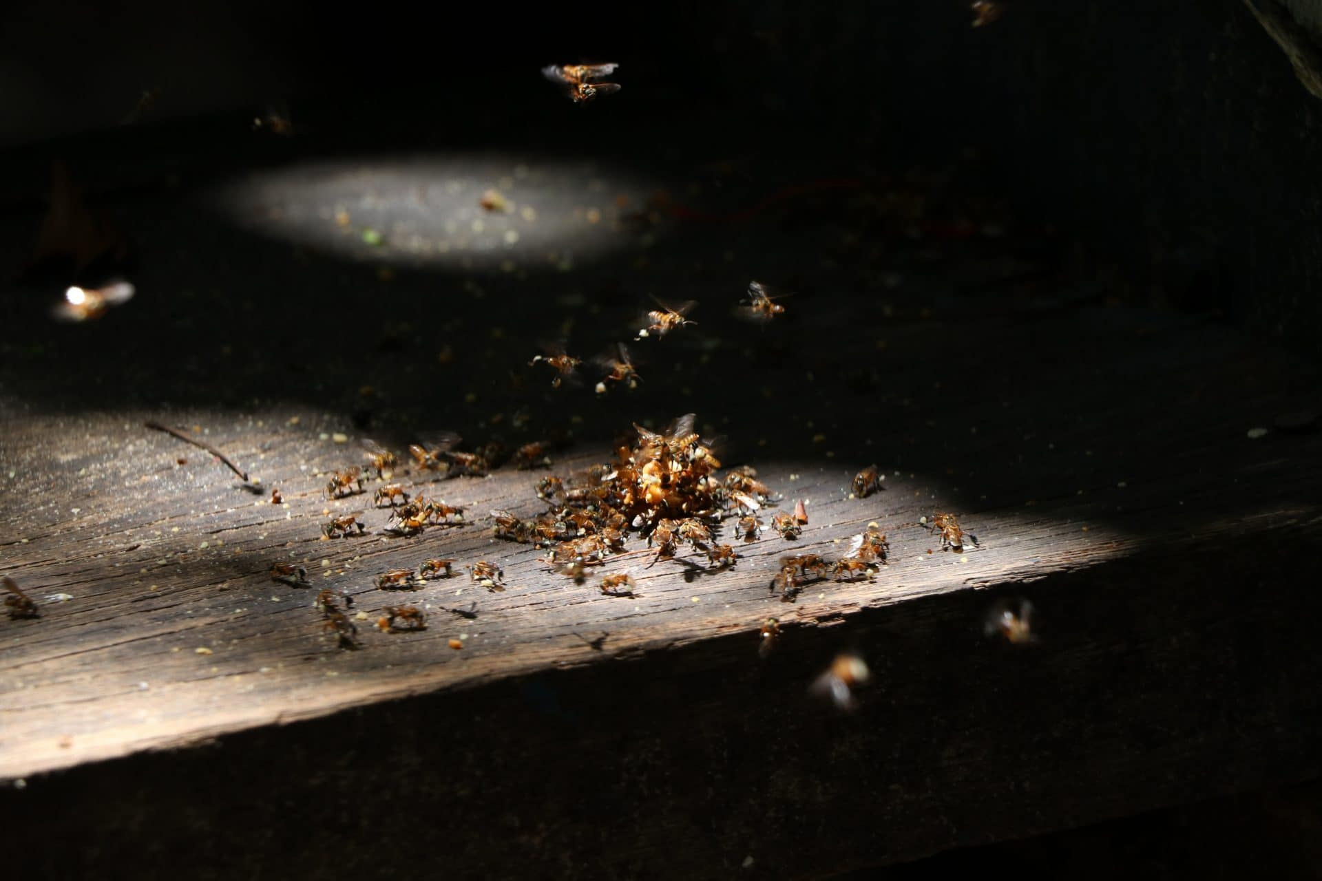 Photo of termites on top of a wood