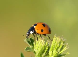 Lady bug on top of a plant